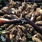 Romania Quail Shooting