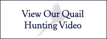 View Our Quail Hunting Video